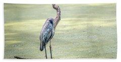 Great Blue Heron Standing In A Marsh Hand Towel