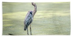 Great Blue Heron Standing In A Marsh Hand Towel