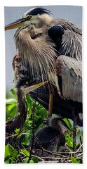 Great Blue Heron With Babies Bath Towel