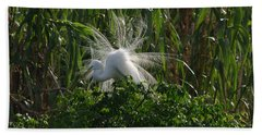 Great Egret Displays Windy Mating Plumage Hand Towel