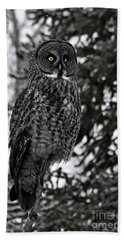 Great Grey Owl Portrait Bath Towel