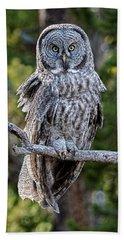 Great Grey Owl Yellowstone Hand Towel