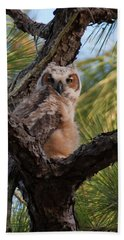 Great Horned Owlet Hand Towel by Paul Rebmann