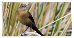 Great-tailed Grackle Hand Towel by Afrodita Ellerman