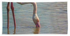 Greater Flamingo In Parc De Camargue, France Bath Towel