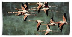 Greater Flamingo Phoenicopterus Ruber Hand Towel