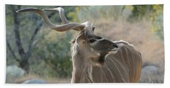 Bath Towel featuring the photograph Greater Kudu 4 by Fraida Gutovich
