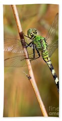 Green Dragonfly Closeup Bath Towel