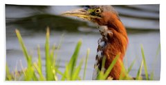 Green Heron Closeup  Bath Towel