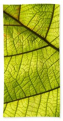 Hand Towel featuring the photograph Green Leaf Closeup by Matthias Hauser