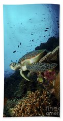 Green Sea Turtle Resting On A Plate Hand Towel