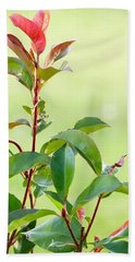 Bath Towel featuring the photograph Greenery And Red by Ivana Westin