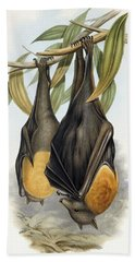 Grey Headed Flying Fox, Pteropus Poliocephalus Hand Towel by John Gould