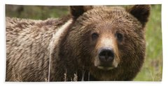 Grizzly Portrait Hand Towel