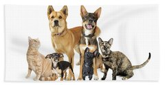 Group Of Cats And Dogs Looking Up On White Hand Towel