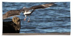 Gull With Sea Otter Photobomb Hand Towel