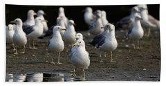 Gulls At The Beach Hand Towel
