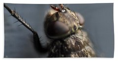Hair On A Fly Hand Towel by Glenn Gordon