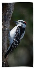 Downy Woodpecker Hand Towel by Kenneth Cole