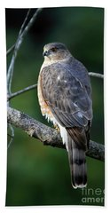 Handsome Sharp Shinned Hawk Bath Towel