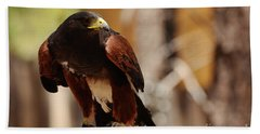 Hand Towel featuring the photograph Harris Hawk by Debby Pueschel