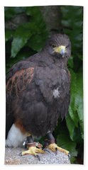 Harris Hawk Bath Towel