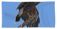 Harris Hawk - Transparent Bath Towel