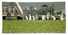 Harvesting Organic Lettuce Bath Towel