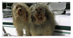 Bath Towel featuring the photograph Havanese Dogs by Sally Weigand