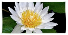 Hand Towel featuring the photograph Hawaiian White Water Lily by Sue Melvin