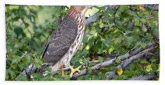 Bath Towel featuring the photograph Hawk  by AJ Schibig