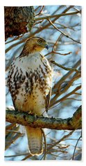 Hawk Bath Towel