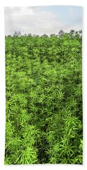 Hemp Plantation Hand Towel