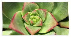 Hens And Chicks Succulent And Design Hand Towel