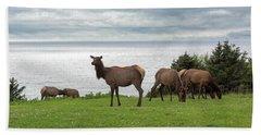 Herd Of Elk At Ecola State Park Bath Towel