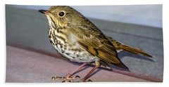 Hermit Thrush Bath Towel