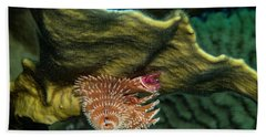 Hand Towel featuring the photograph Hidden Christmastree Worm by Jean Noren