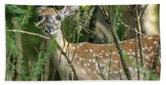 Hiding Fawn Bath Towel
