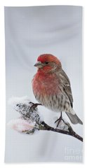 House Finch And Spring Snowfall - D010346 Hand Towel