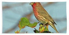 House Finch Bath Towel