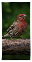 House Finch Hand Towel by Kenneth Cole