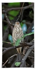 Hand Towel featuring the photograph House Finch V43 by Mark Myhaver
