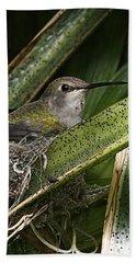 Nesting Anna's Hummingbird Bath Towel