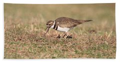 Hungry Killdeer Hand Towel by Karen Silvestri