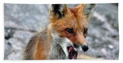 Bath Towel featuring the photograph Hungry Red Fox Portrait by Debbie Oppermann