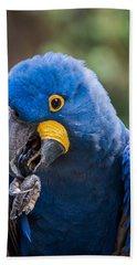 Hyacinth Macaw Hand Towel