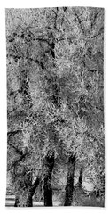 Iced Cottonwoods Hand Towel by Colleen Coccia