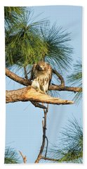 If Looks Could Kill - Hawk Hand Towel