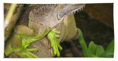 Bath Towel featuring the photograph Iguana - A Special Garden Guest by Christiane Schulze Art And Photography