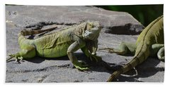 Iguana Perched On A Rock In The Sun Hand Towel